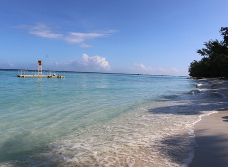 Two weeks in Paradise - Sharks and all
