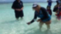 A passenger from P&O Cruise ship releasing a baby turtle