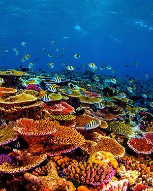 Hard Coral Garden.jpg