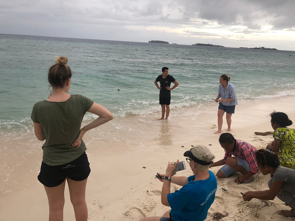 We had the opportunity to release turtles back into the sea