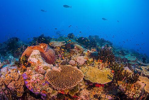 diverse coral reefs