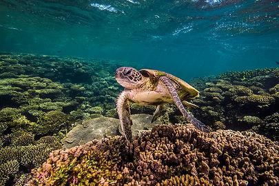 Taking dip in its natural habitat