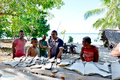 Shark fins caught by local fishermen at the Conflict Islands