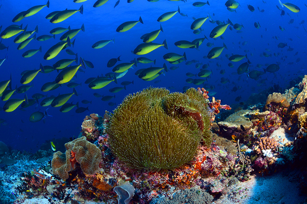 amazing coral reefs png