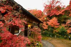 11月下旬の紅葉の様子です