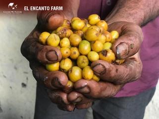 コロンビア・エル・エンカント農園