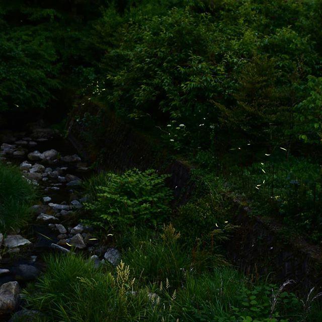 筑紫野市山口の蛍