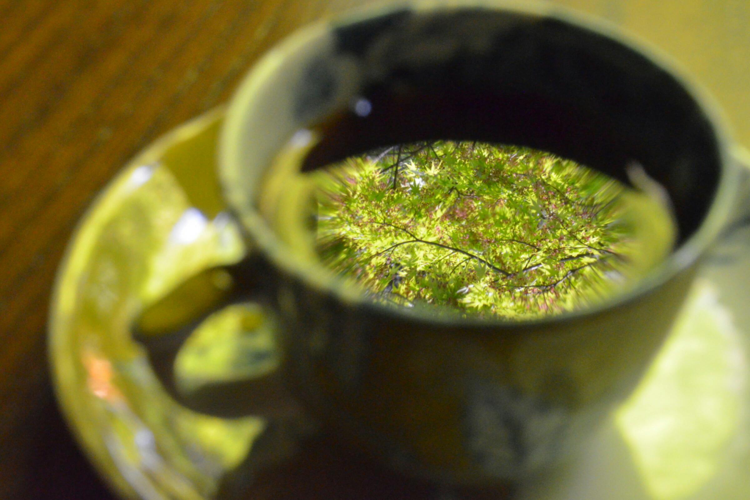 緑を眺めながらコーヒーを