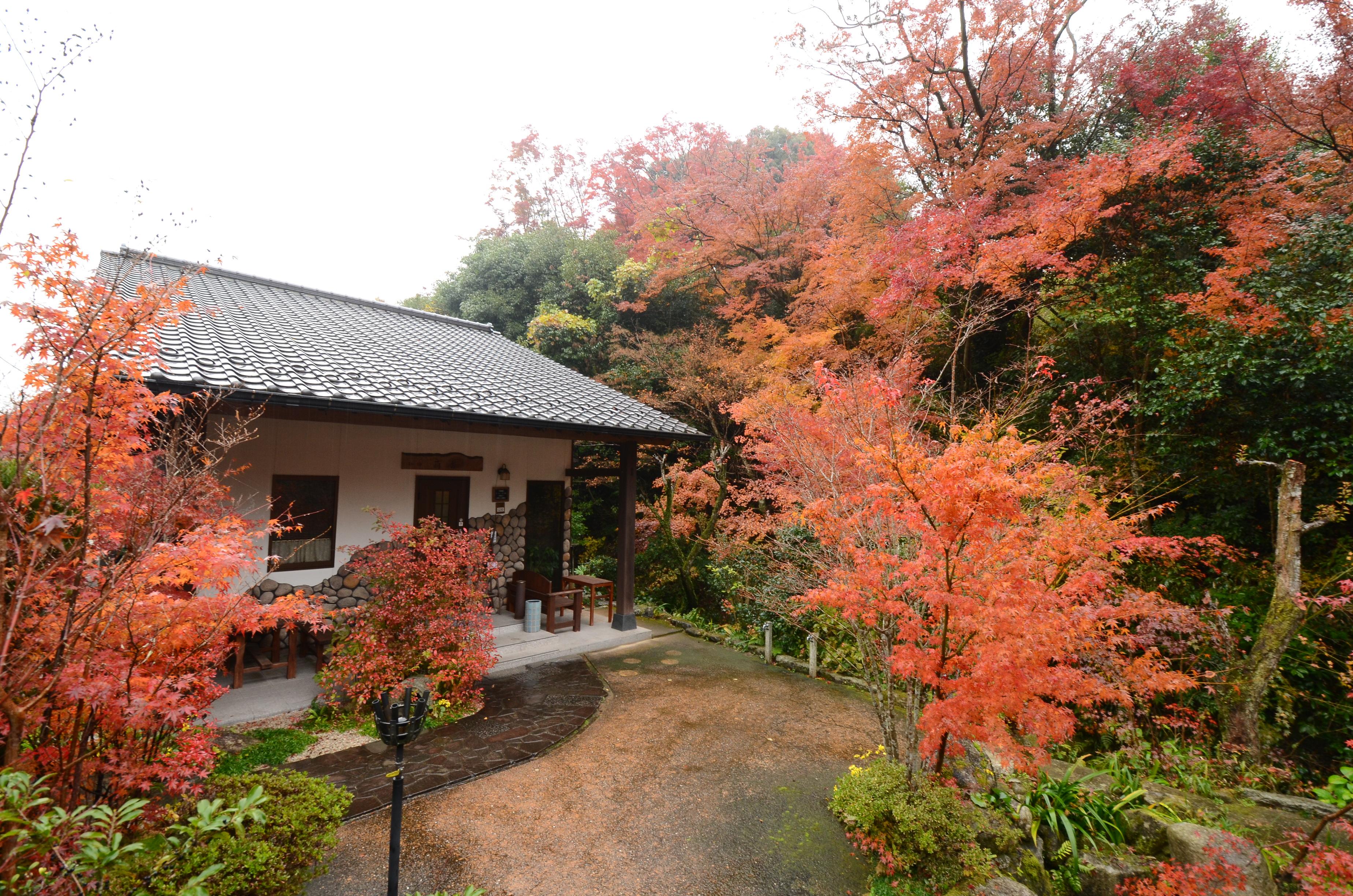 紅葉の季節の萌香