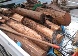 流木の片付け