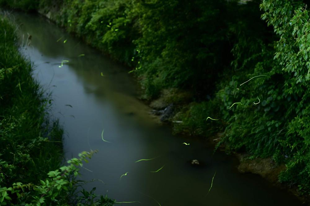 筑紫野市の蛍スポット
