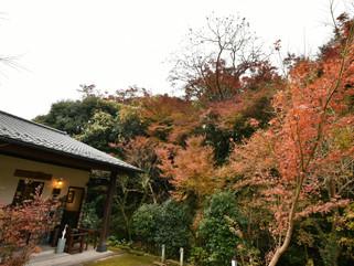 11月26日の紅葉の様子です