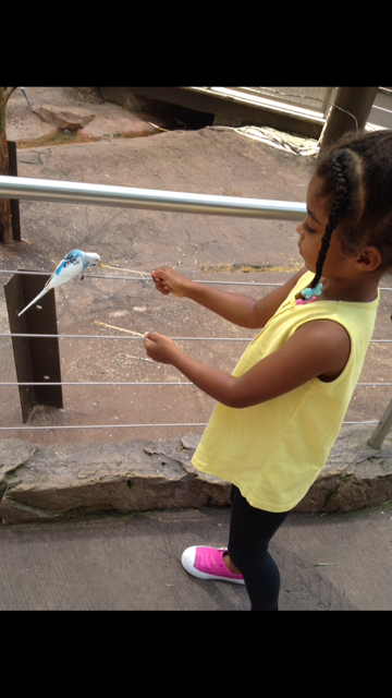 Feeding the birds at Zoo Atl