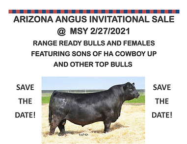 lazy s bull sale 2020.png