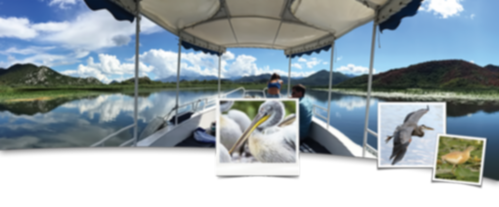 Individual boat trips at lake skadar