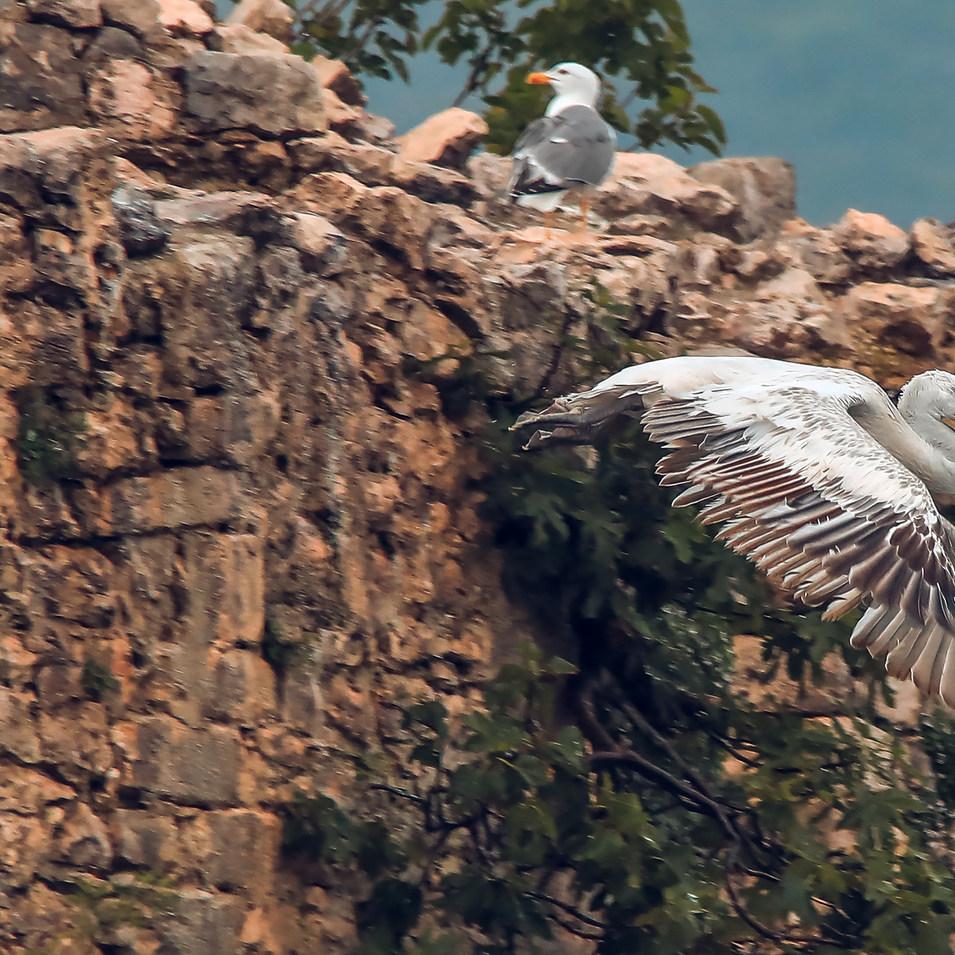 Pelican escape.jpg