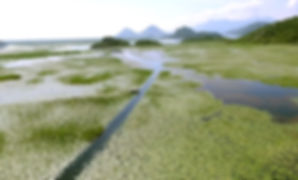 Island at Skadar lake