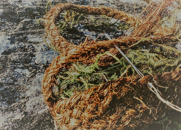 wix moss.jpg