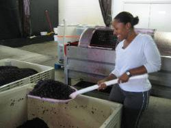 wine producing