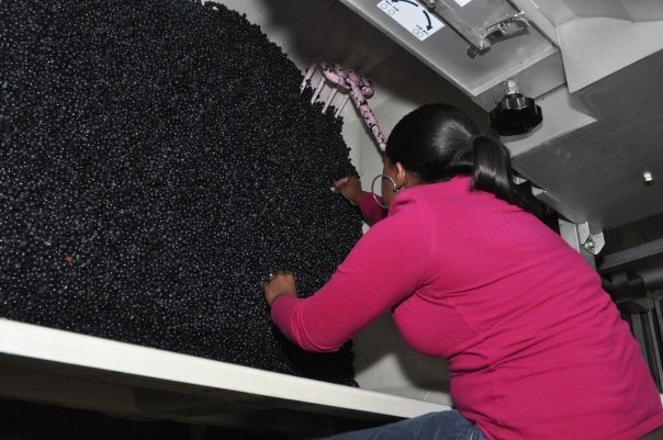 Producing Wine