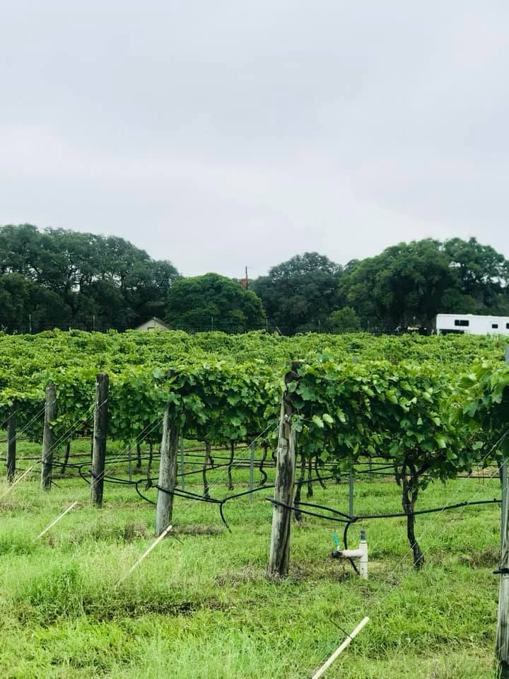 Fredericksburg, TX Private Vineyard