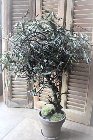 Stoere boom lente.JPG