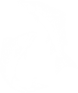 Jumping Salmon.png