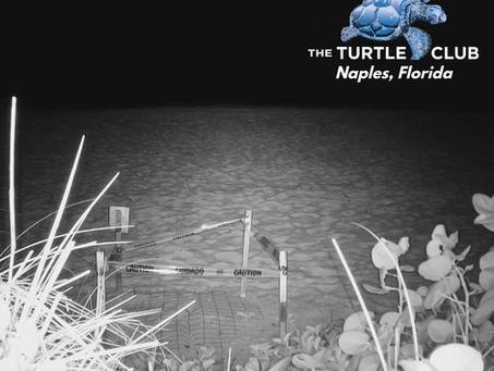 Turtle Hatch
