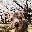 nara-deer-park-japan-day-trip-23.jpg