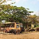 Bali-Safari-Marine-Park-.jpg