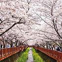 Spring-in-South-Korea.jpg
