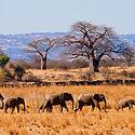 tanzania-budget-safaris.jpg