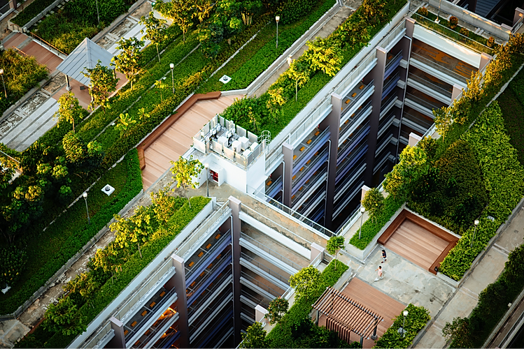 Green%20Roofs_edited.png