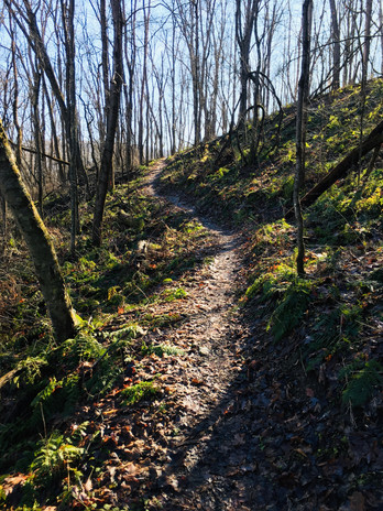 Que trail singletrack