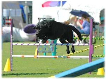 Go Over Rover (intro to agility)