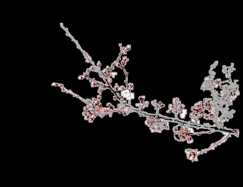 ענף שקד.png