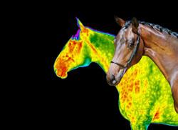 3 horse plus DITI overlay_edited