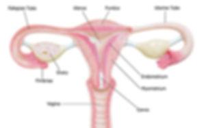 PMS singapore, dysmenorrhea singapore, menstrual cramps singapore, cramps relief singapore, period pain relief singapore