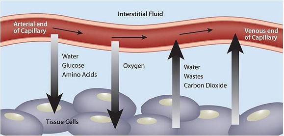 how micro bood circulation works