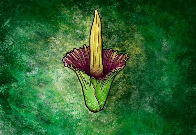 Corpse Flower