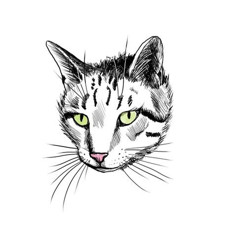 Ray Illustration