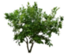 O8W54P-bushes-transparent-background.png