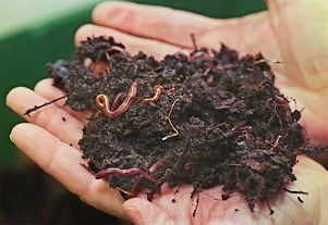 Worms-Vermicompost-1_edited.jpg