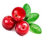 Three-bright-red-cowberries-with-green-l