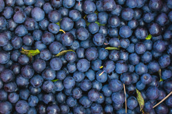 Close-up-of-blueberries-1135069998_6687x