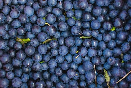 Close-up-of-blueberries-1135069998_6687x4460.jpeg