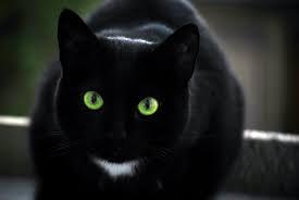 Kedi Gözü (1 Uyumlama)