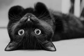 Kara Kedi Gücü (1 Uyumlama)
