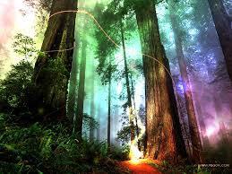 Büyüleyici Orman Sihri (1 Uyumlama)