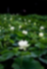 green-4335008__340.webp